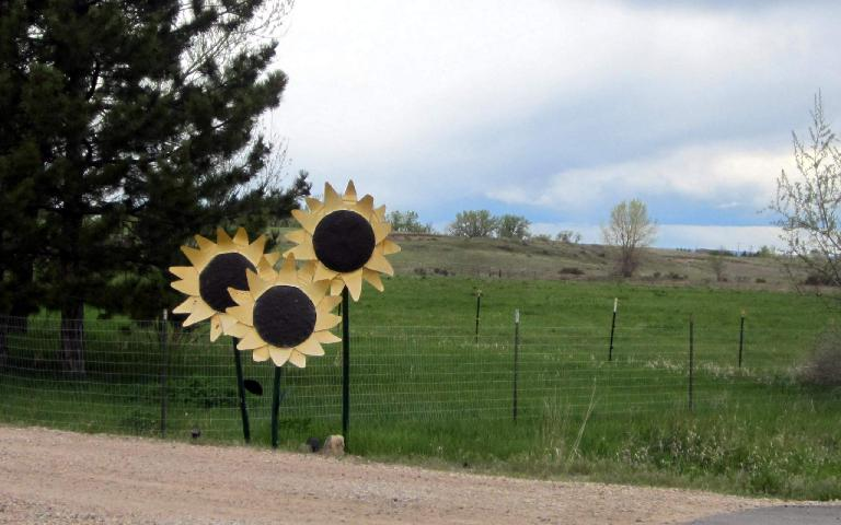 Giant plastic sunflowers.