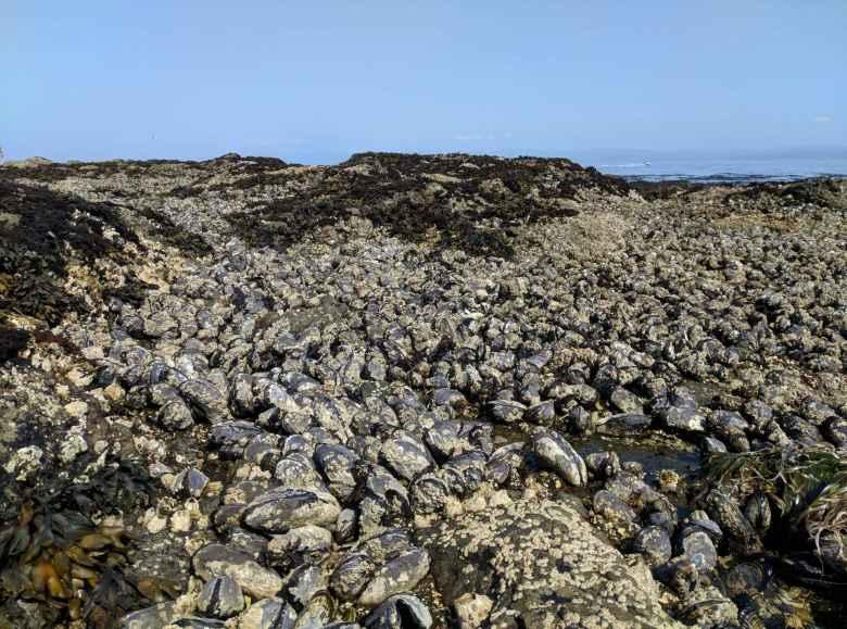 Mussels at Salt Creek County Park.