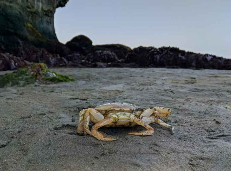 A crab at at Salt Creek County Park.