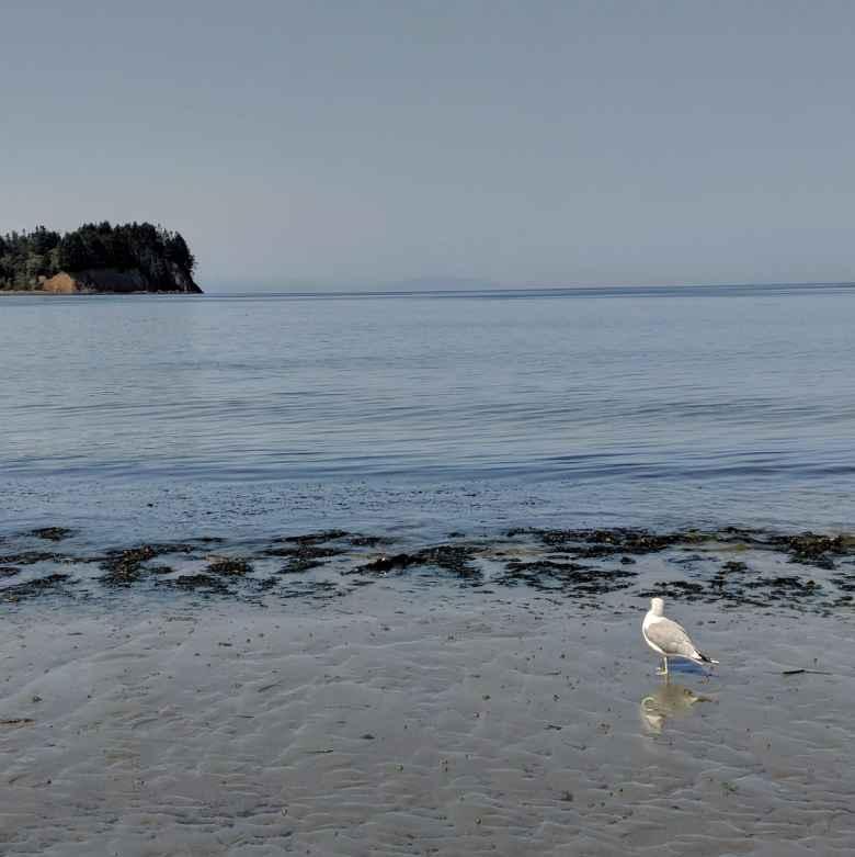 A white bird at Salt Creek County Park.