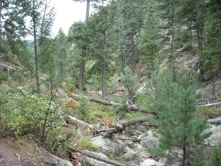 Downed trees in the Poudre Canyon on our hike towards Grey Rock. (September 18, 2011)