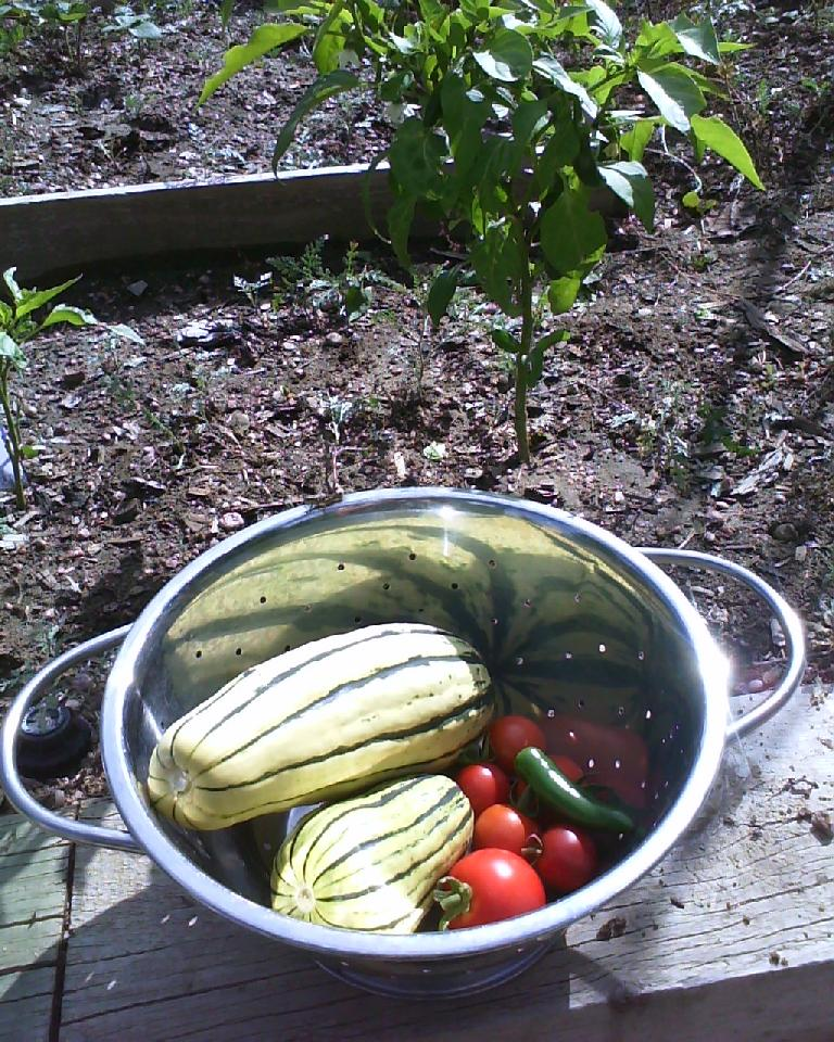 Some vegetables that were ripe: delicata squash, cherry tomatoes and a jalape