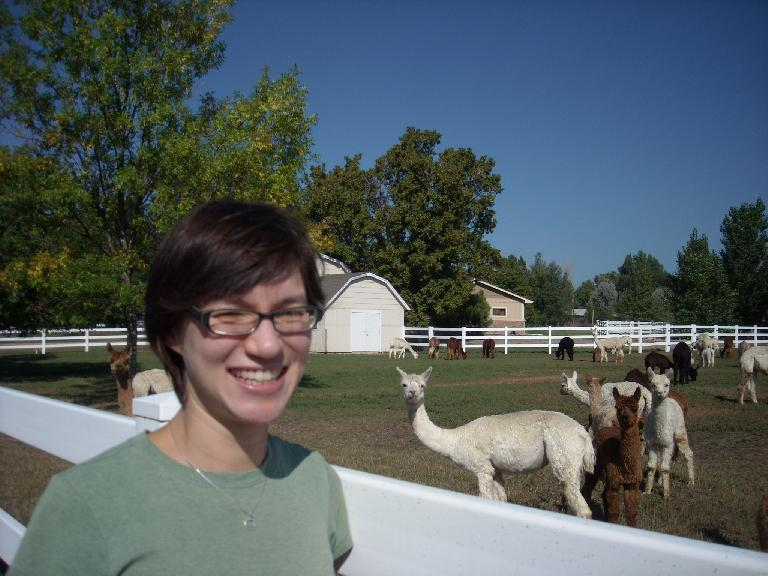 Sarah and the alpacas.