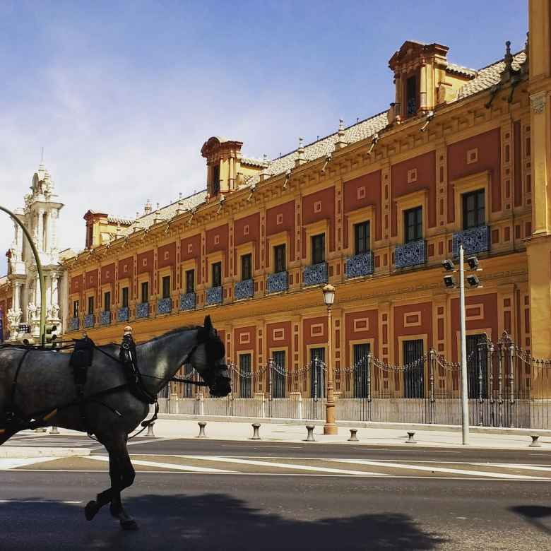 A horse in front of Palacio de San Telmo, a baroque palace and government seat in Seville, Spain.