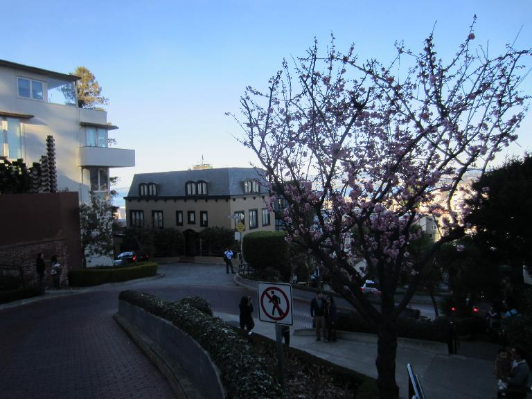 Cherry blossoms on Lombard St.