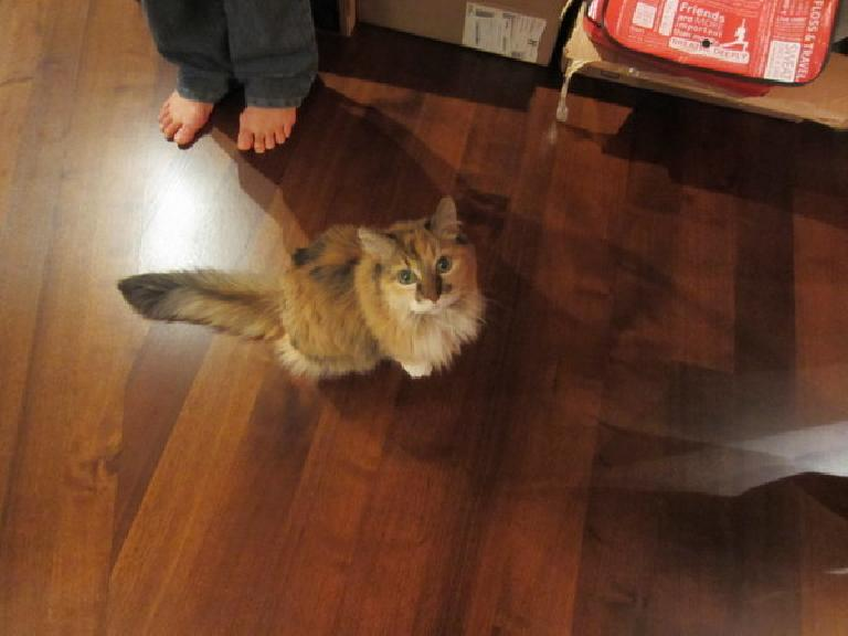 Alyssa's cat Camara at Alyssa and Bryan's place. (January 30, 2012)