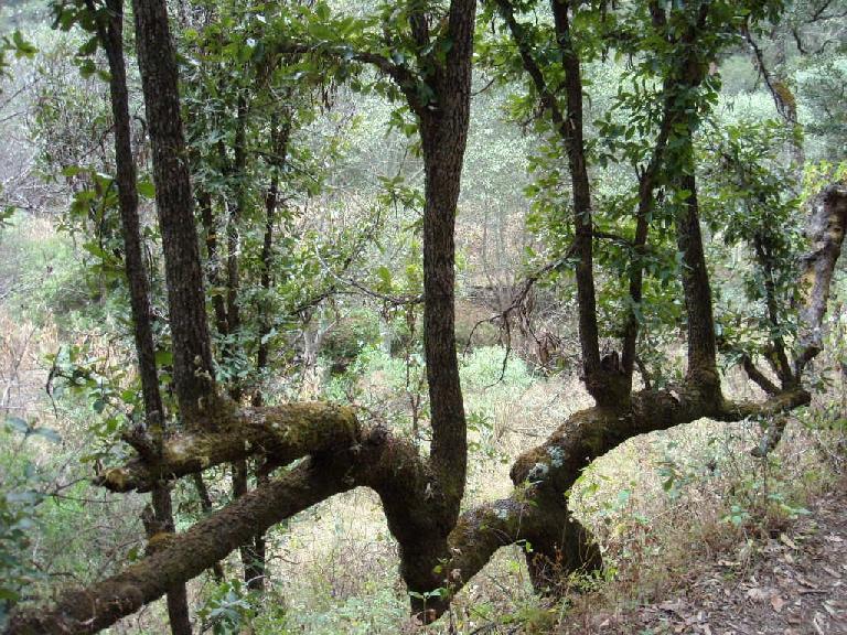 Funky tree.