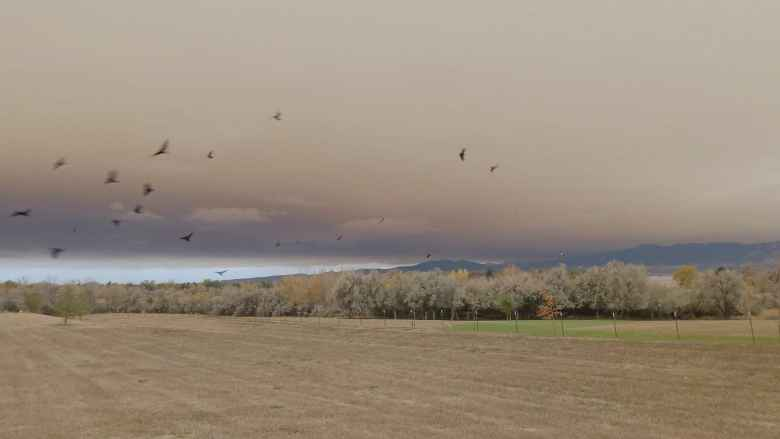 Smoke from the East Troublesome Fire, as seen from north Fort Collins, Colorado.