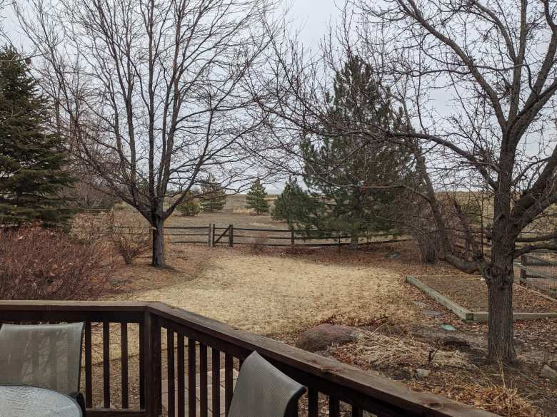 backyard with two leafless trees, yellow grass, evergreen tree, and garden plot of Fort Collins home