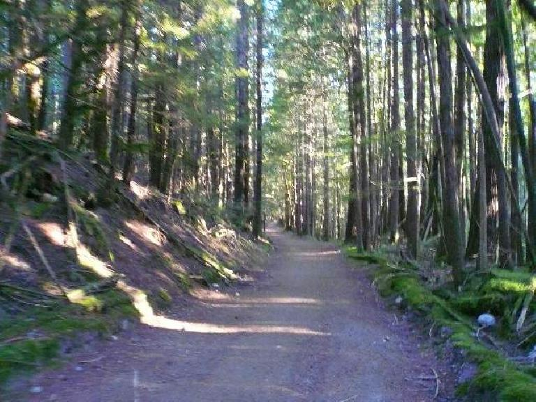 Running through the trees.
