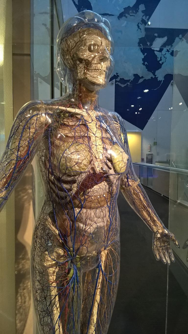 invisible woman, St. Louis Science Center
