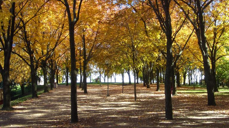 Fall colors at the Jefferson National Expansion Memorial where the Gateway Arch is located.