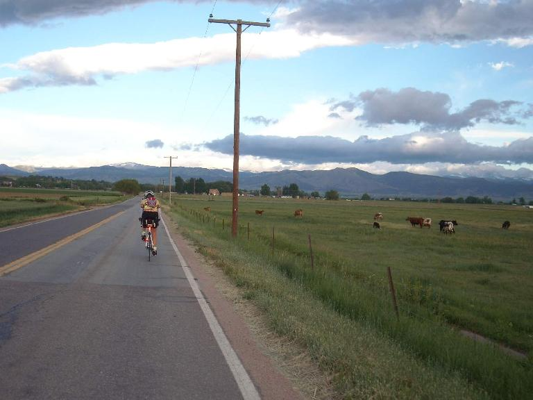 [Mile 38, 6:40am] Riding behind another brevet rider past some cows.