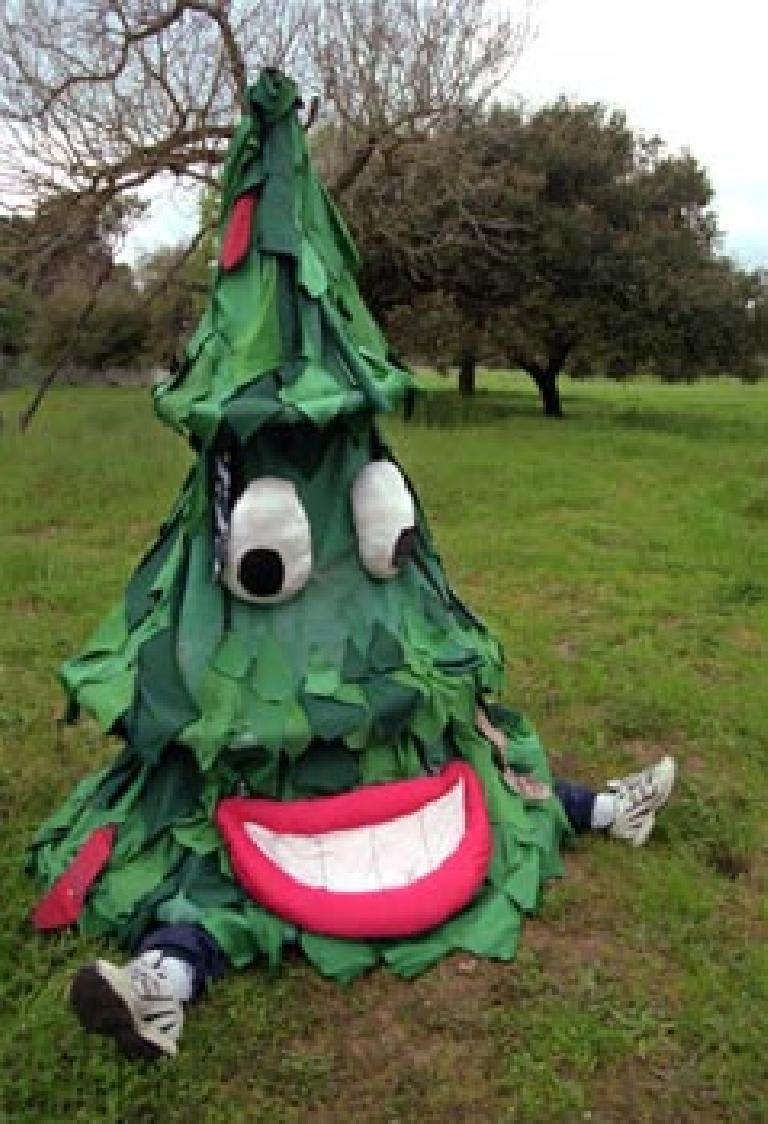 stanford_tree.jpg