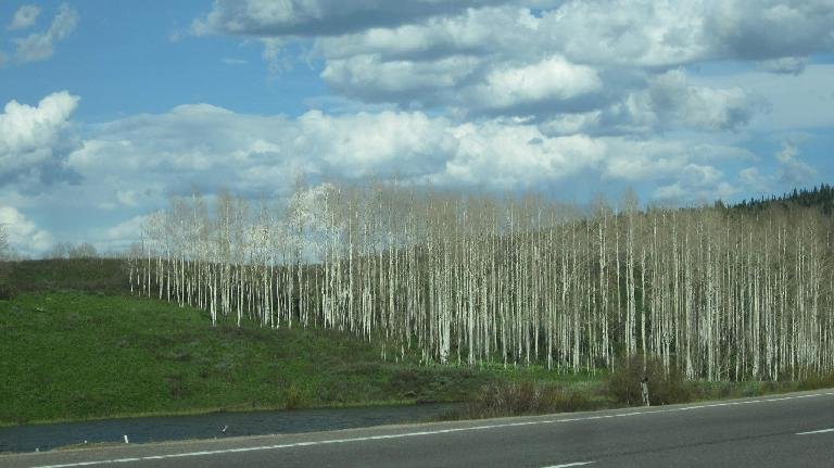 Aspen groves 20 miles west from Steamboat Springs.