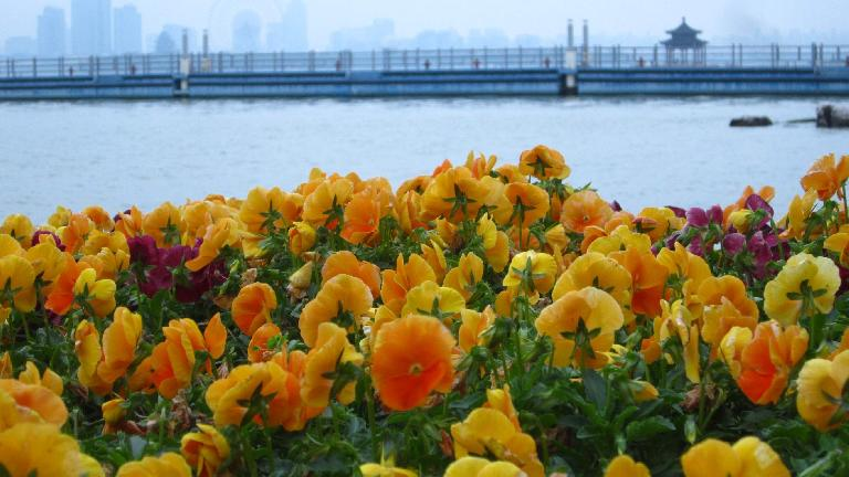Flowers by the water.