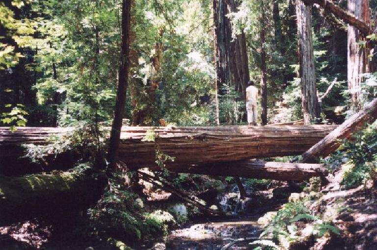 Sarah on a fallen tree overlooking a creek.