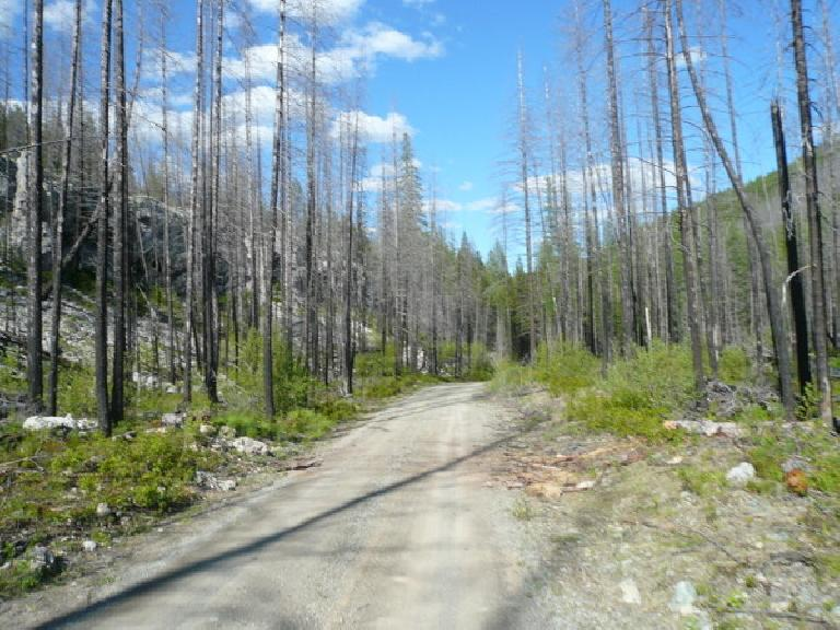 [Day 3, Mile 257] Beautiful trail through the Flathead National Forest in Montana. (June 15, 2008)