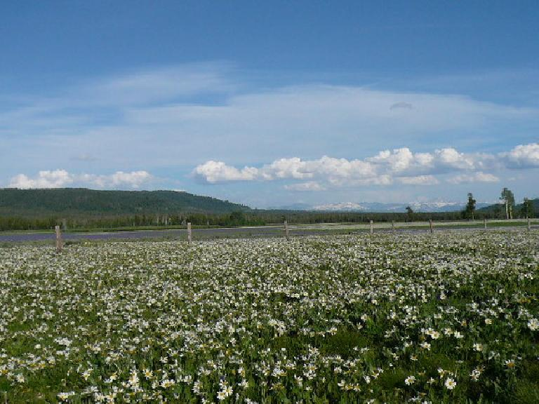 [Day 10, Mile 954] Flowers all over northeastern Idaho with the Tetons in the distance. (June 22, 2008)