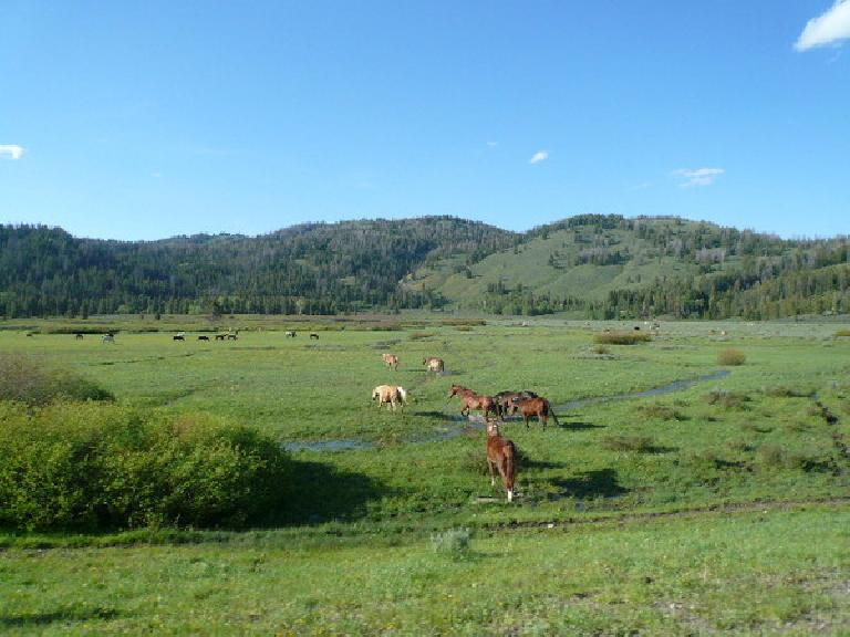 [Day 11, Mile 1046] Horses near the Turpin Meadow Campground in the Teton Wilderness of Wyoming. (June 23, 2008)