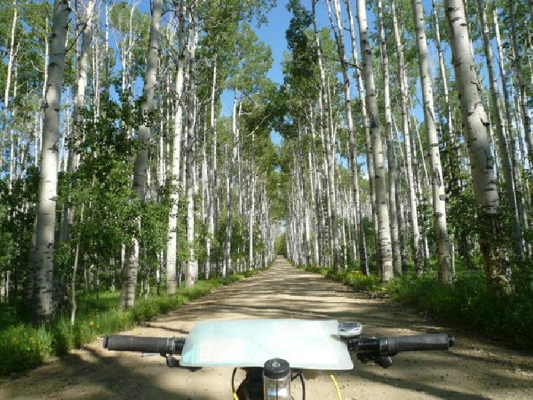 [Day 15, Mile 1448] Aspen Alley, just 18 miles north of Colorado.  Very beautiful! (June 27, 2008)
