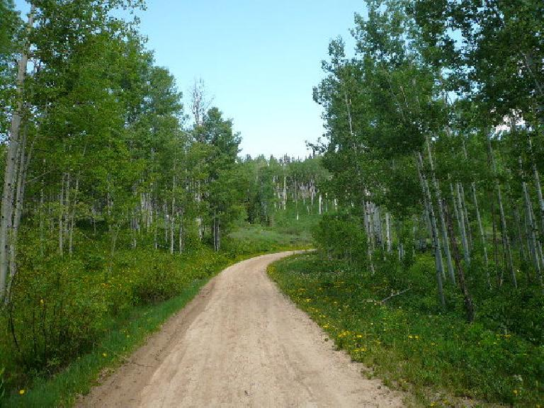 [Day 16, Mile 1500] Through the Routt National Forest of northern Colorado. (June 28, 2008)