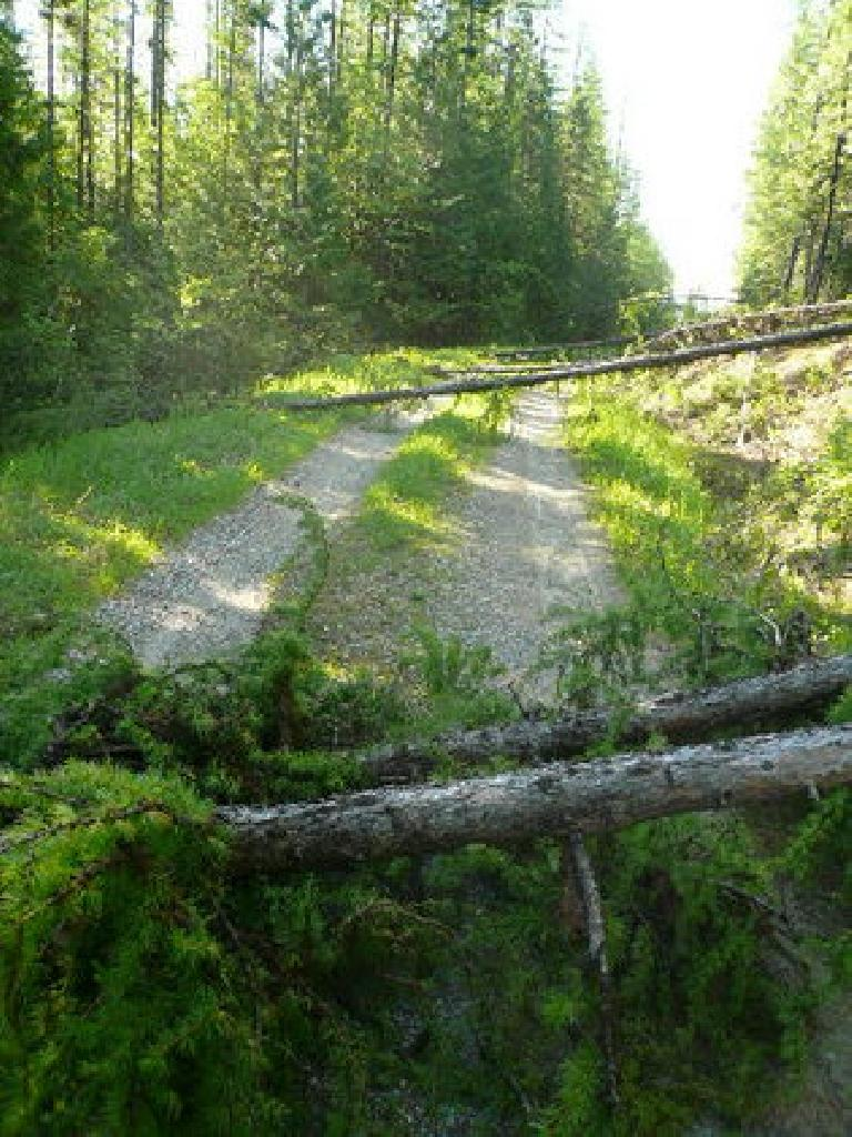 [Days 4 & 5] In northern Montana, there were also downed trees that I had to dismount for about 100 times. (June 16, 2008)