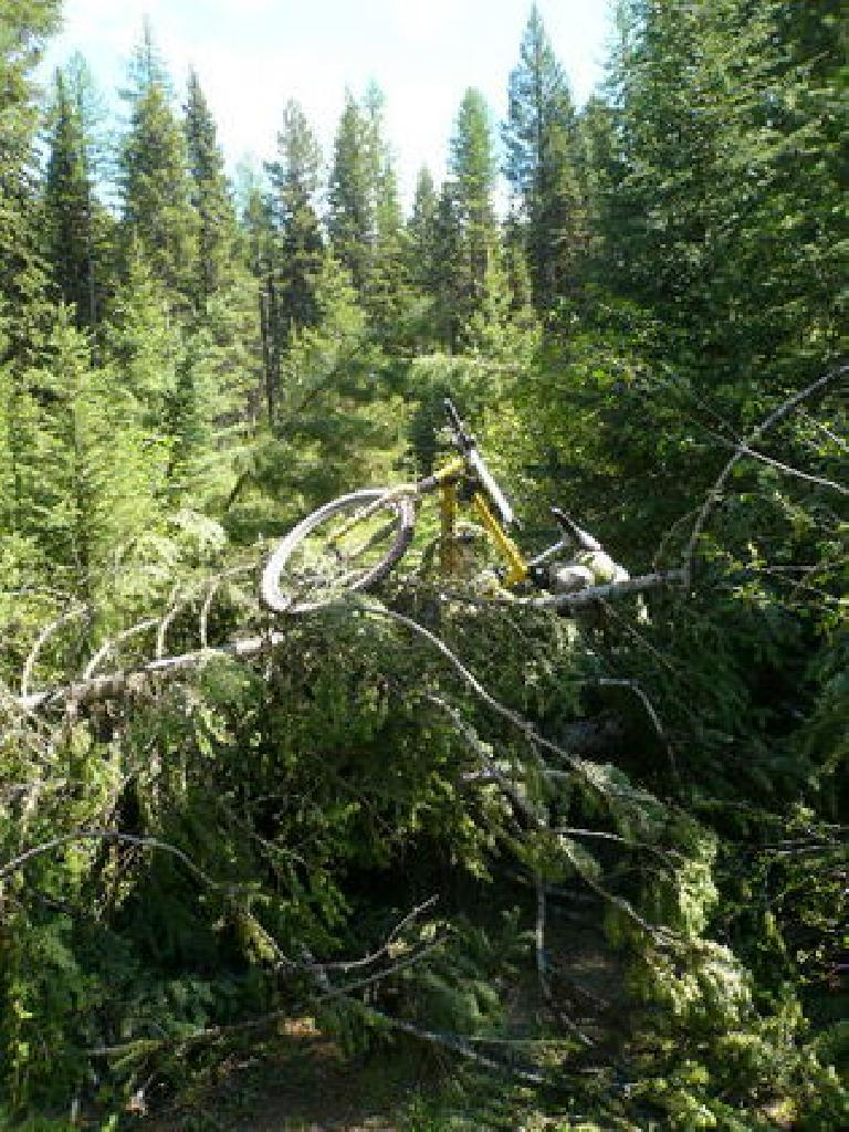 [Day 5] Some of the downed tree piles were ridiculous. I had to throw my bike over this one, and then climb over it like it was a rock climbing wall. (June 17, 2008)