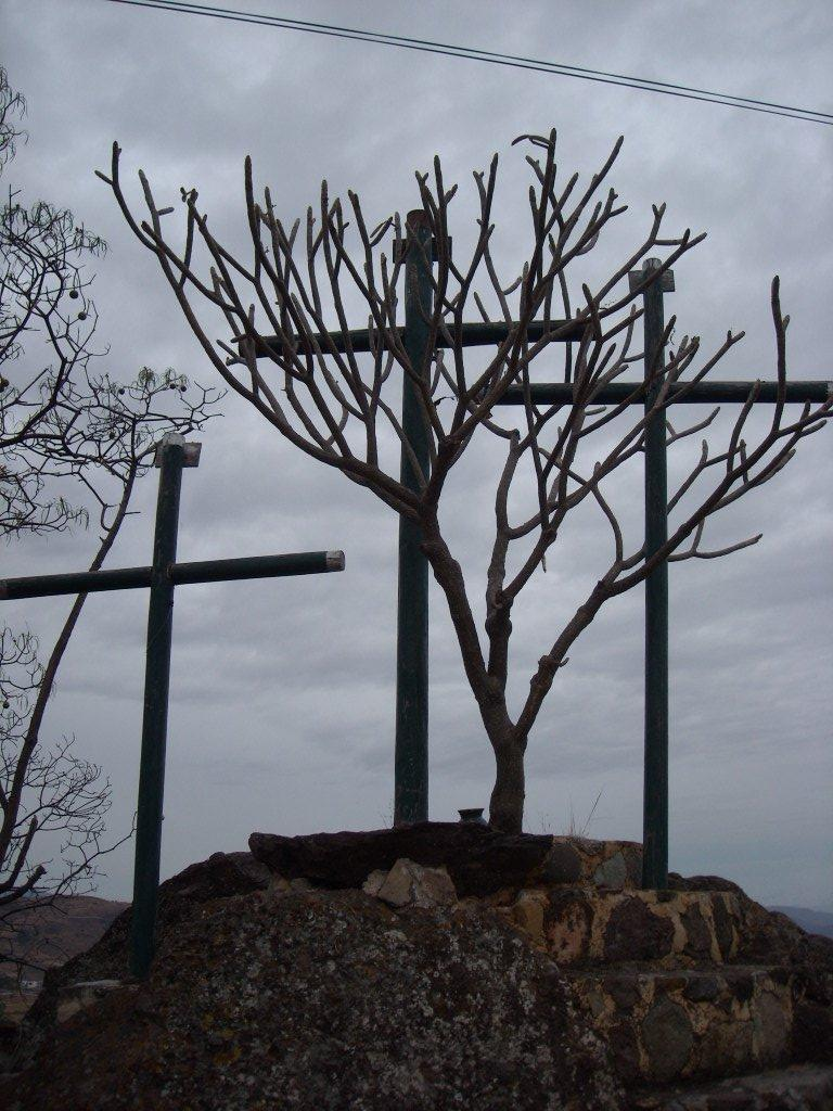 Crosses and what looked like a manzanita outside of Casa Sagrada.