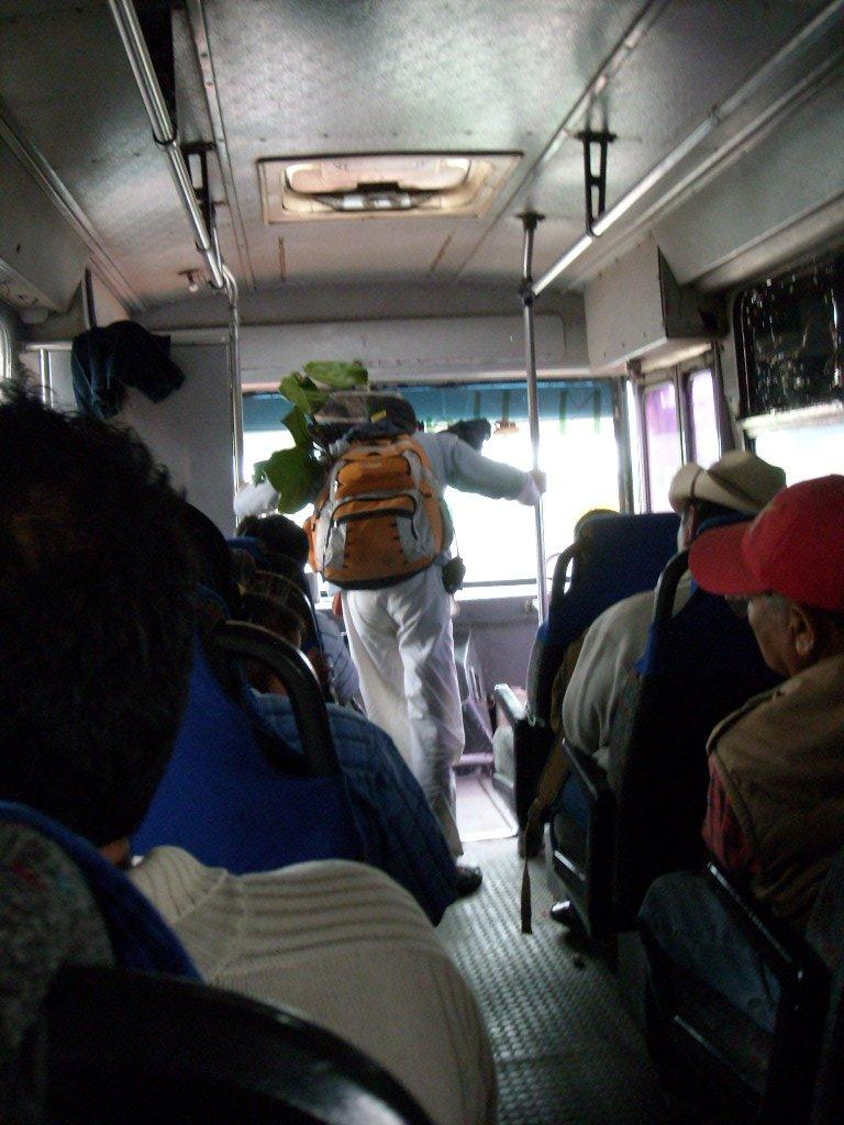 A person with a plant in his backpack on the autobus de segunda clase on our way to Teotitlan de Valle.