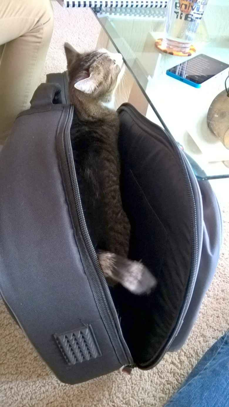 Tiger always loved bags and boxes. Here she is in Maureen's guitar case.