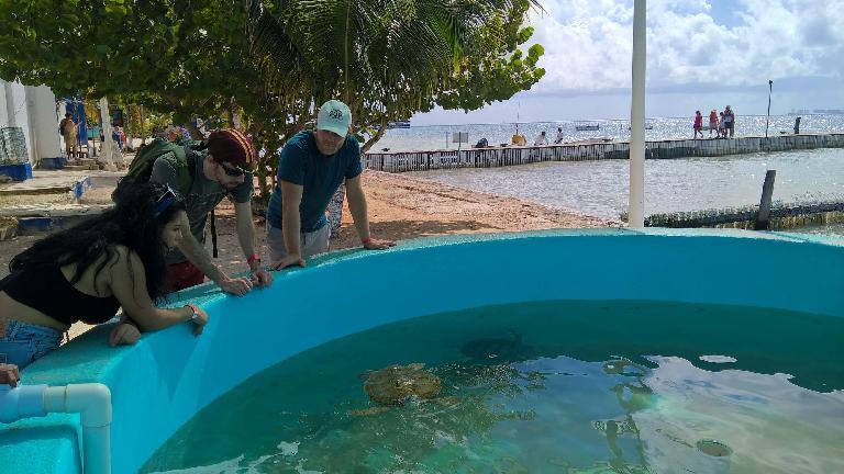 Carolina, Alberto François, Julian Ganton looking at sea turtles