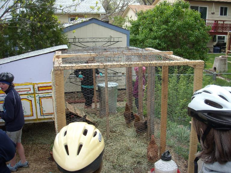 The fourth or fifth chicken coop we visited.