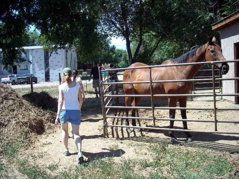 Commander the Horse was doing his job by producing lots of compostable manure.