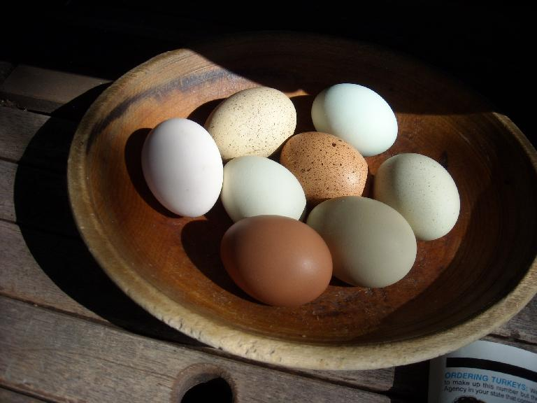 Colorful eggs produced by the chickens (which were mainly kept for the manure) at LaPorte Avenue Nursery.