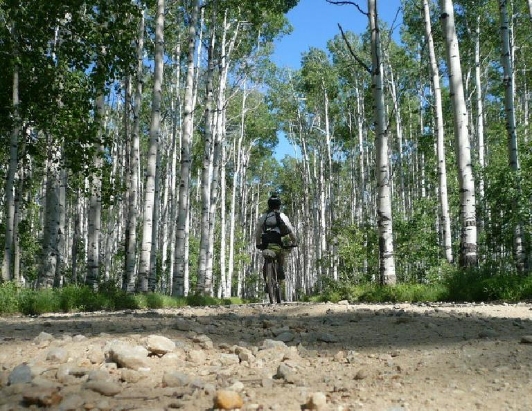 Day 15: This is more like it.  Aspen Alley, WY, less than 20 miles north of Colorado. (June 27, 2008)