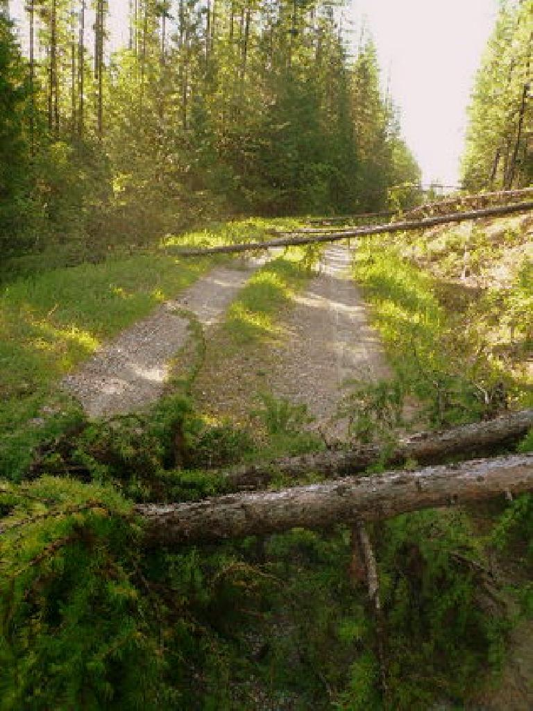 Day 4: Through the land of fallen trees. Between Days 4 & 5, I had to dismount about 100 times for them. (June 16, 2008)