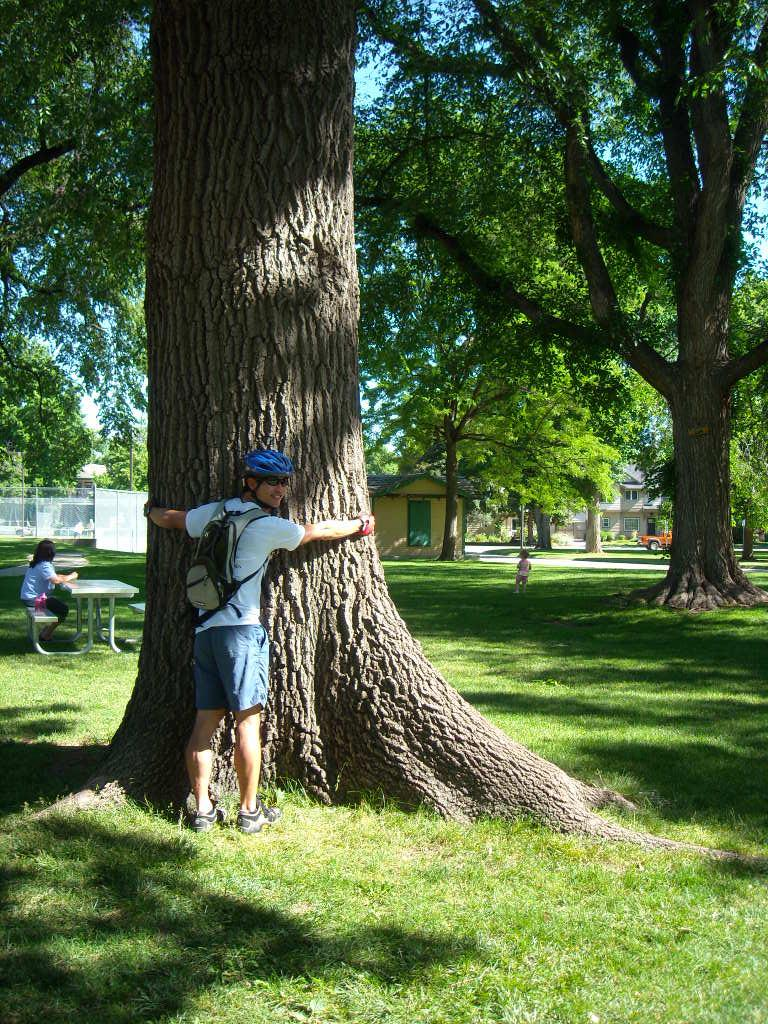 Felix Wong hugging a 90-year-old Northern Red Oak (a #2 champ) in the Fort Collins City Park playground.