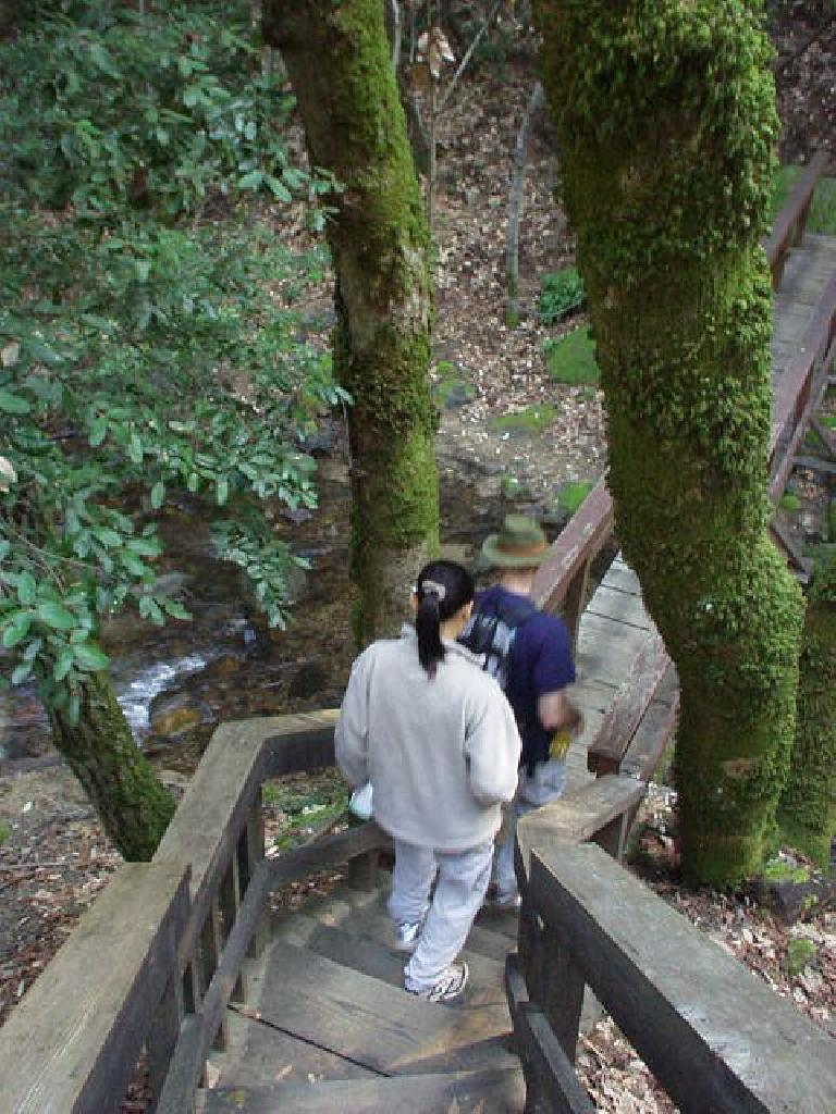 Did you know that the SF Bay Area has waterfalls?  Neither did we.  Here is Evelyn and Adrian walking down one of the several bridge walkways in the Uvas Canyon County Park.