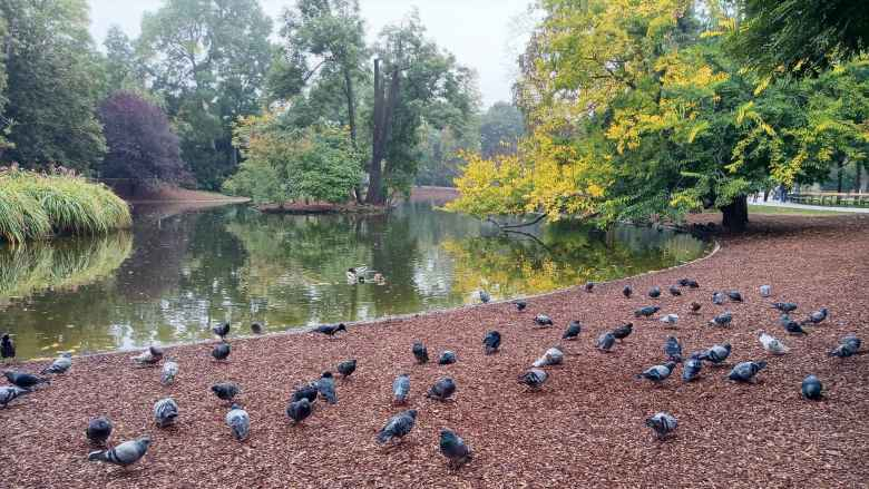 Birds and lack at Stadtpark in Vienna.