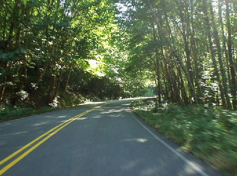 "From WA-503 I continued on Route 25, which was an even more delightful drive.  Much of it went through ""tunnels of trees"" much like this photo shows."