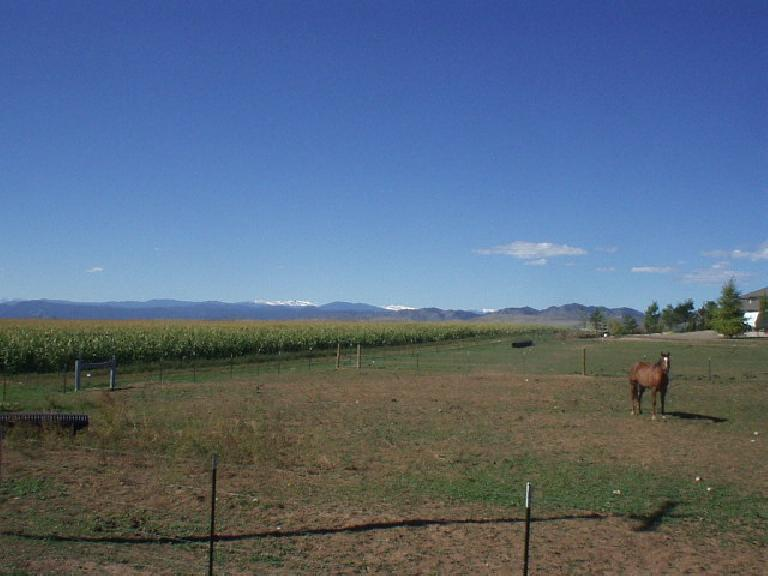 [Mile 87, 11:02 a.m.] Cornfields, snow-capped mountains, and horses.