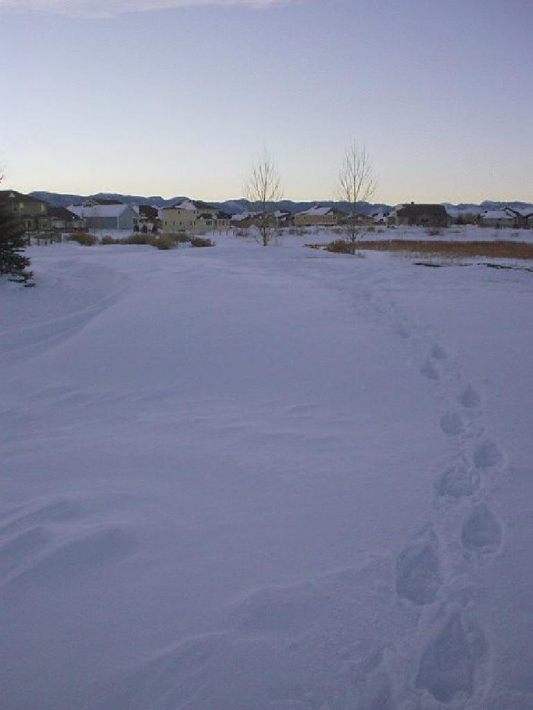 Going along the walking (well, now snowshoeing) trail in the neighborhood towards the Horsetooth Mountains.