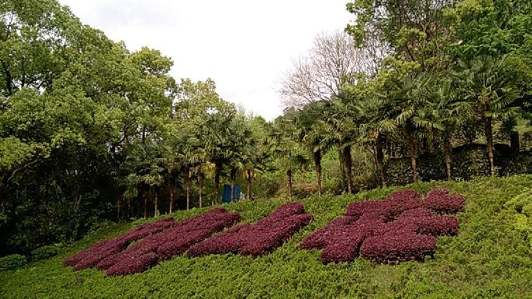 Bushes shaped as Chinese characters in Wuyishan. (April 18, 2016)