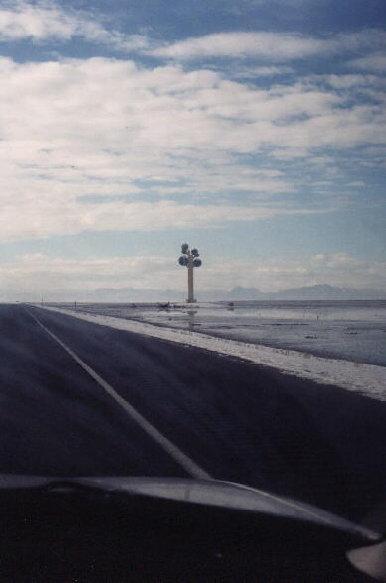 A random tree along the Salt Flats. (January 31, 2000)