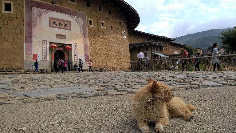 A dog outside a Hakka Tulou in Yongding.